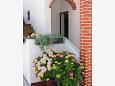 Dvorišče - Apartmaji in sobe Barbat (Rab) - 4862