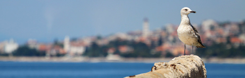 Riviera Crikvenica Kroatien