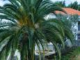 Rastići, Čiovo, Courtyard 11706 - Vacation Rentals blizu mora.