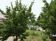 Terrace - view - Apartment A-5396-a - Apartments Krk (Krk) - 5396