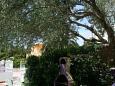 Makarska, Terrace - view u smještaju tipa studio-apartment, dopusteni kucni ljubimci i WIFI.