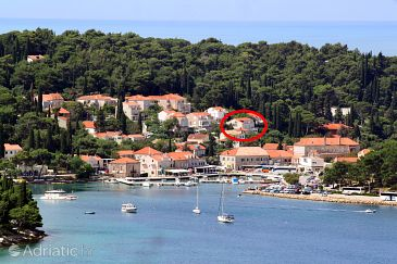 Property Cavtat (Dubrovnik) - Accommodation 9068 - Apartments near sea.