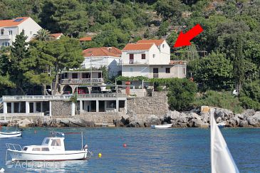 Property Molunat (Dubrovnik) - Accommodation 9102 - Apartments and Rooms near sea.