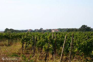 Rožac u rivijeri Umag (Istria)
